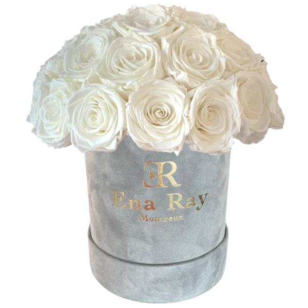 Roses éternelles blanche